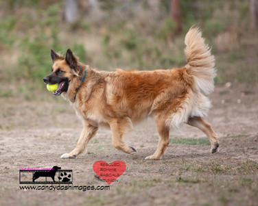 dog photography RR (16).jpg