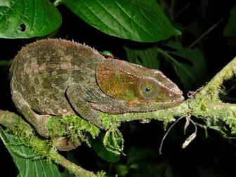 Madagascar, naturaleza salvaje y población