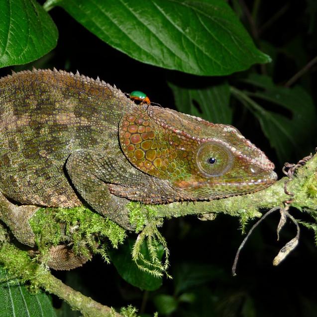 Indigo Be Madagascar
