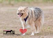 dog photography RR (19).jpg