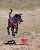 dog photography RR (43).jpg