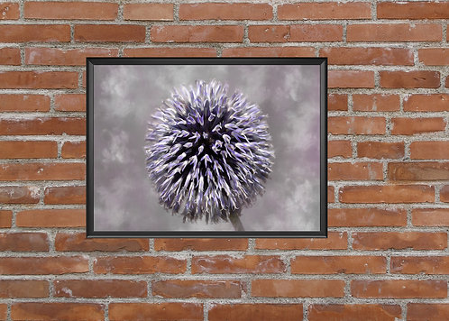 A4 PRINT ALLIUM FLOWER