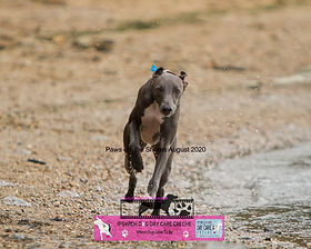 Dog photography paws on the shores (27).