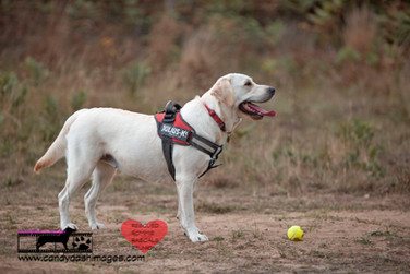 dog photography RR (13).jpg