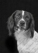Riley  (9).png