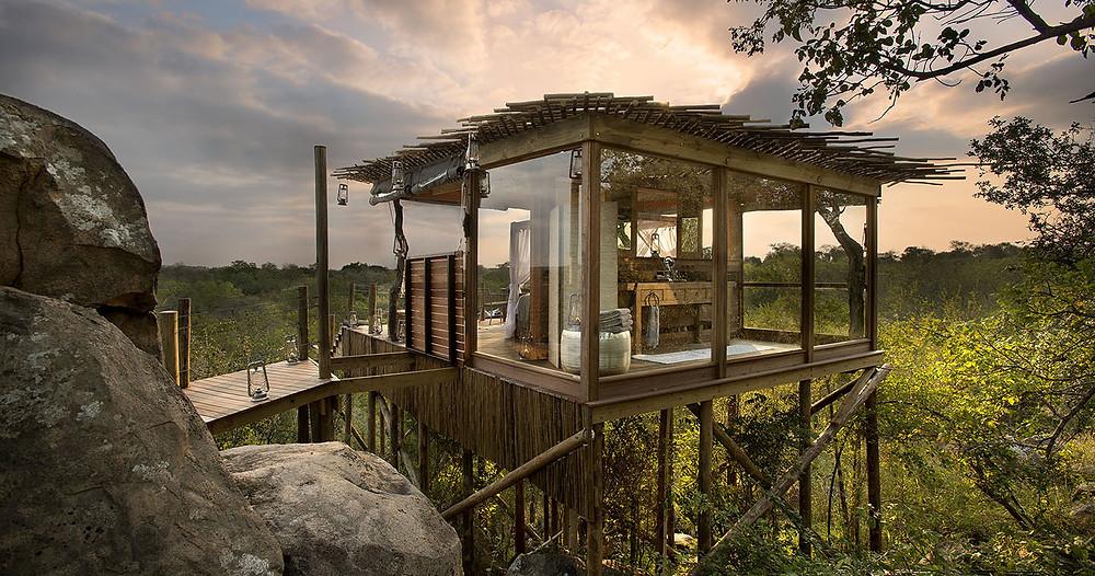 treehouse-lion-sands-ultimate-safari-experience-sabi-sands.jpg