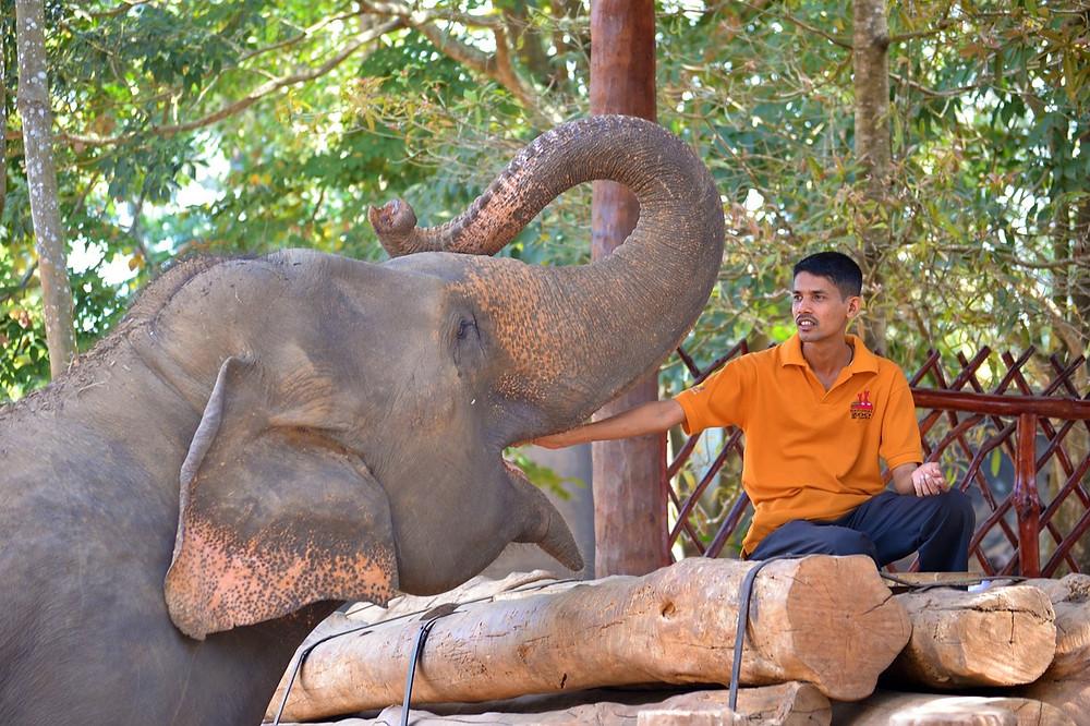 feeding-elephant-264713_1280 (2).jpg
