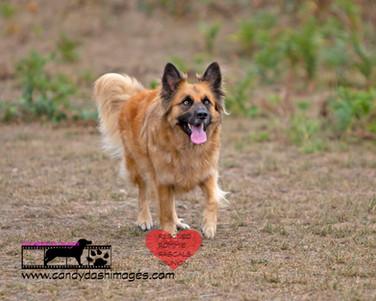 dog photography RR (39).jpg