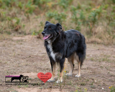 dog photography RR (33).jpg