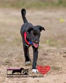 dog photography RR (45).jpg