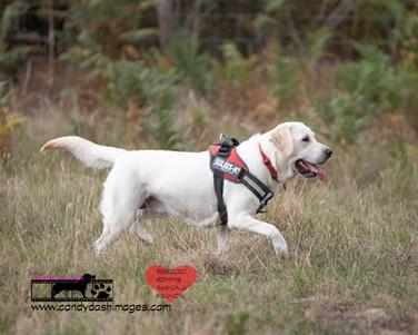 dog photography RR (12).jpg