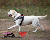 dog photography RR (18).jpg