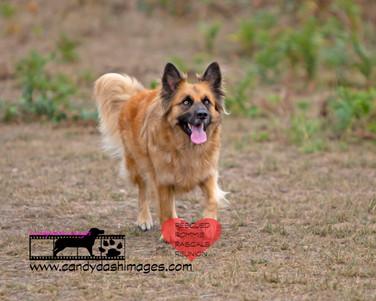 dog photography RR (38).jpg