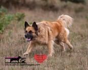 dog photography RR (36).jpg