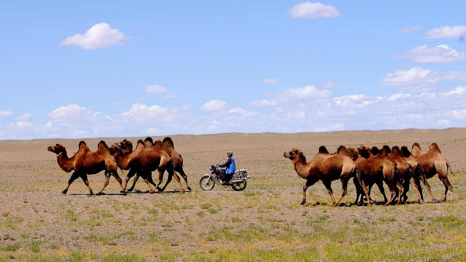 Descubriendo Mongolia