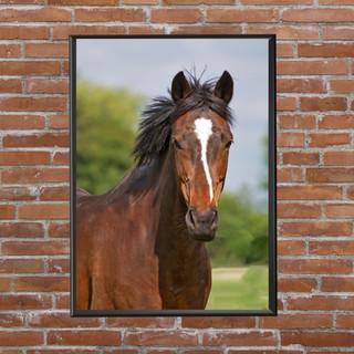 HORSE MOCK WIX.jpg