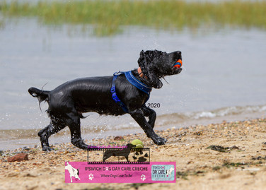 Dog photography paws on the shores (18).