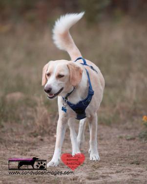 dog photography RR (14).jpg