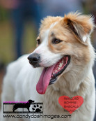 dog photography RR (30).jpg