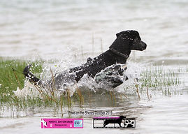 Photograph of a black dog jumping in water
