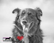 dog photography RR (52).jpg