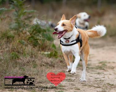 dog photography RR (1).jpg