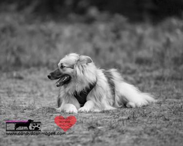 dog photography RR (24).jpg