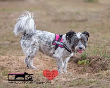 dog photography RR (5).jpg