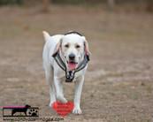 dog photography RR (40).jpg