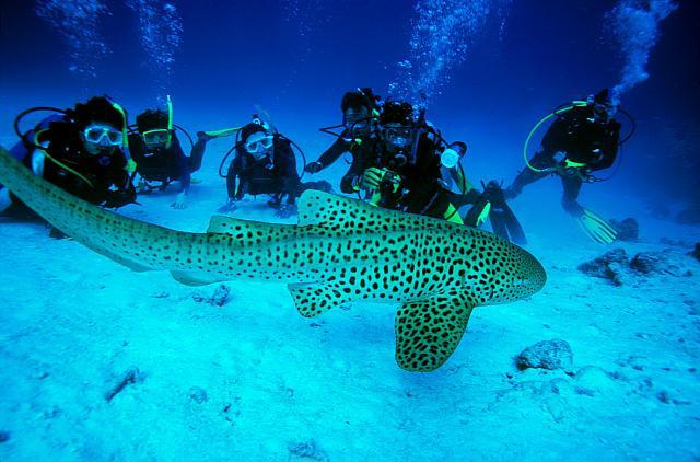 Scuba Diving, Andaman Sea