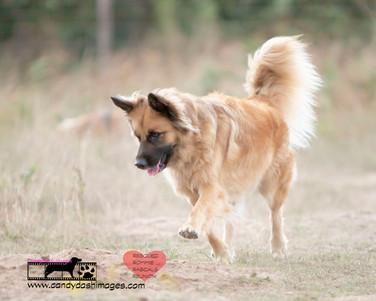 dog photography RR (9).jpg