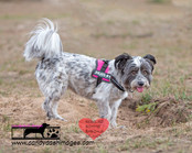 dog photography RR (4).jpg