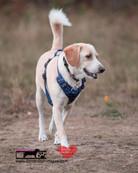 dog photography RR (15).jpg