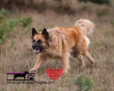 dog photography RR (37).jpg