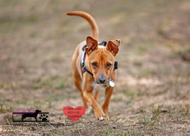 dog photography RR (35).jpg