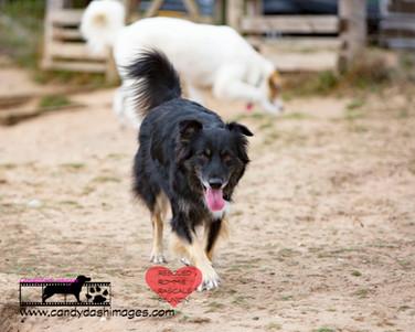 dog photography RR (22).jpg