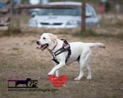 dog photography RR (17).jpg