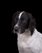 Riley  (6).png