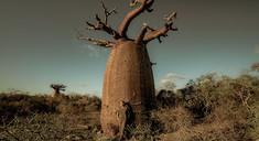 """IndigoBe: """"Madagascar es nuestra historia de amor"""""""