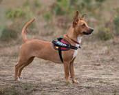 dog photography RR (25).jpg