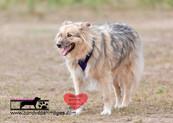 dog photography RR (21).jpg