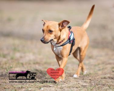 dog photography RR (48).jpg