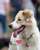 dog photography RR (29).jpg