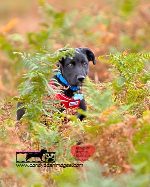dog photography RR (42).jpg
