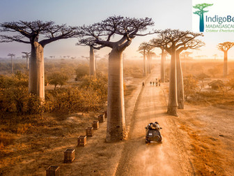 ¿Por qué viajar a Madagascar?