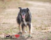 dog photography RR (2).jpg