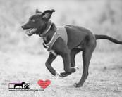 dog photography RR (10).jpg