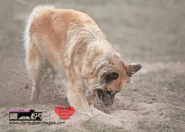 dog photography RR (7).jpg