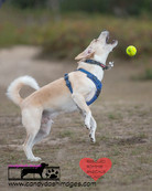 dog photography RR (6).jpg