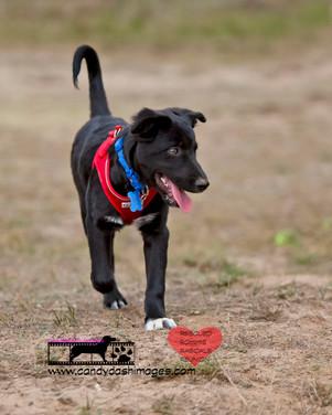 dog photography RR (44).jpg